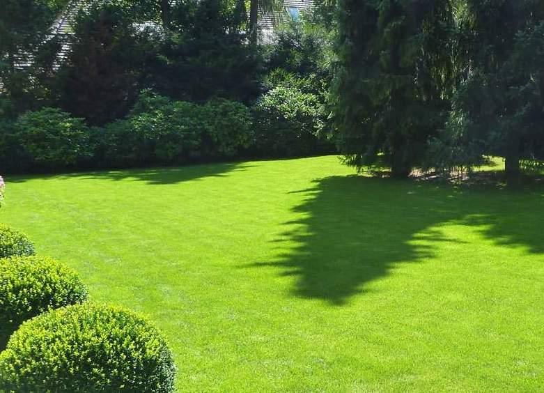 Græsslåning og vedligeholdelse af din græsplæne